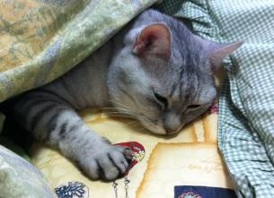 猫の寝姿には見えませんが(笑)