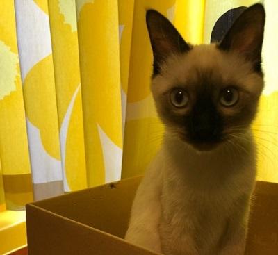 猫あるある!アマゾンの箱が大好き