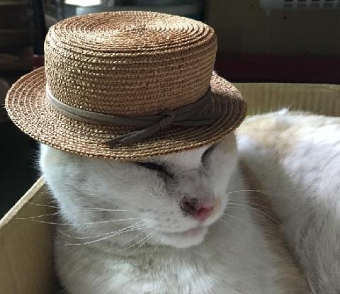 帽子もよく似合いました