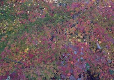 1本の木に色とりどり♪