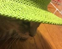 子どもの帽子をちょっと拝借
