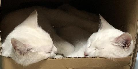 左がお母さん、右が娘です